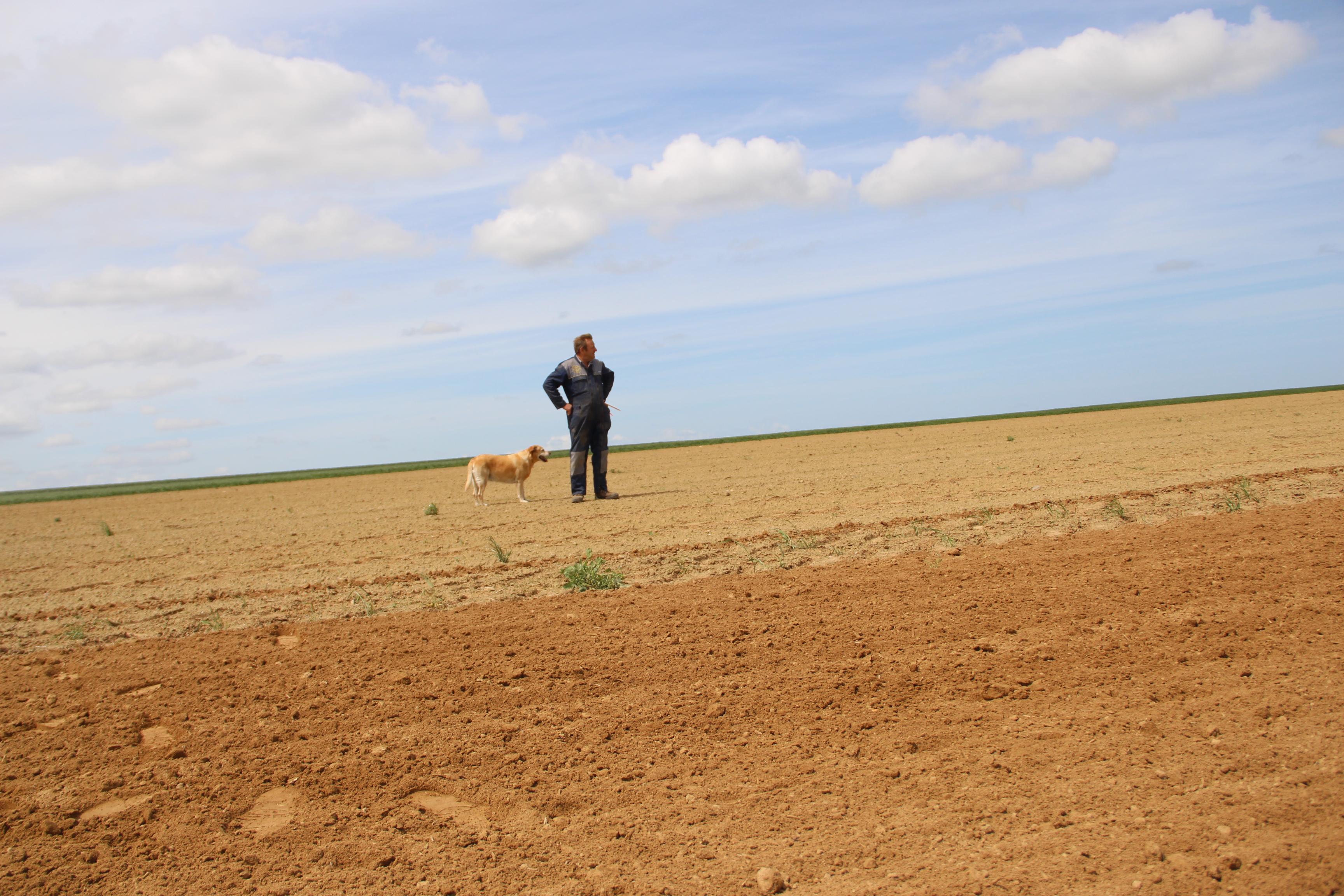 Henri Pomikal et son chien sur la parcelle d'esaai chanvre 2020