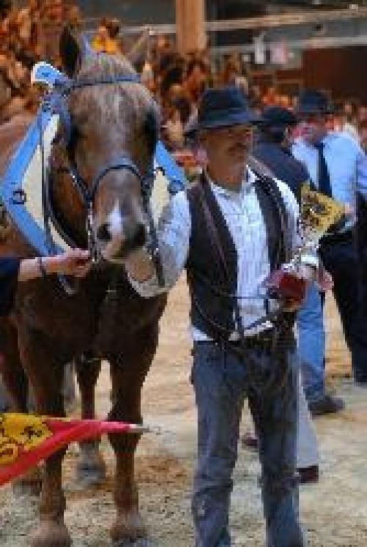 "Odun de la Vallière champion ""cheval de trait"""